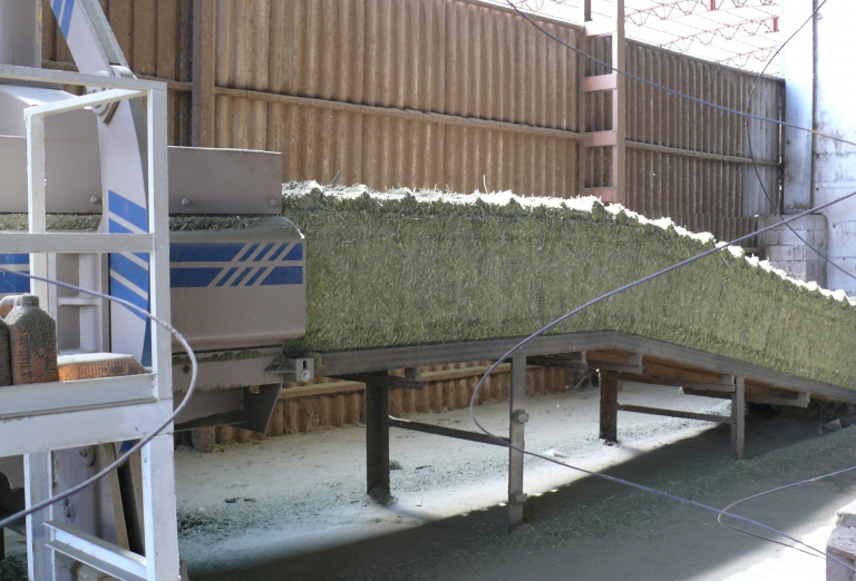The processing of alfalfa into pellets or bales
