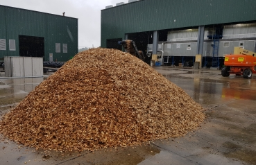 Production of dried wood chips
