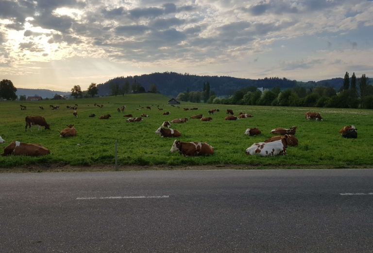 Drying of grass for cattle feed production
